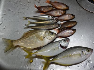 ポニョそうすけ好きぃ!でも焼き魚もっと好きぃ! , 魚へのボケ
