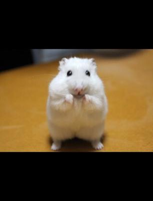 ネズミ 縁起 白