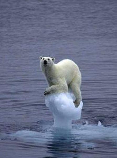 地球温暖化を警告するポスターが、動物愛護団体に警告されるのを聞いて。人間がいなくなればいいのにと思う。 , シロクマへのボケ[42628364] ,  ボケて(bokete)