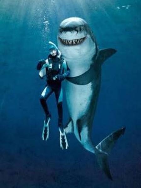 海 の ギャング 海中最強の生き物はシャチ!その強さを追求!!