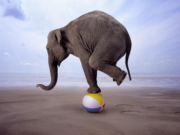「ゾウ ボール」の画像検索結果