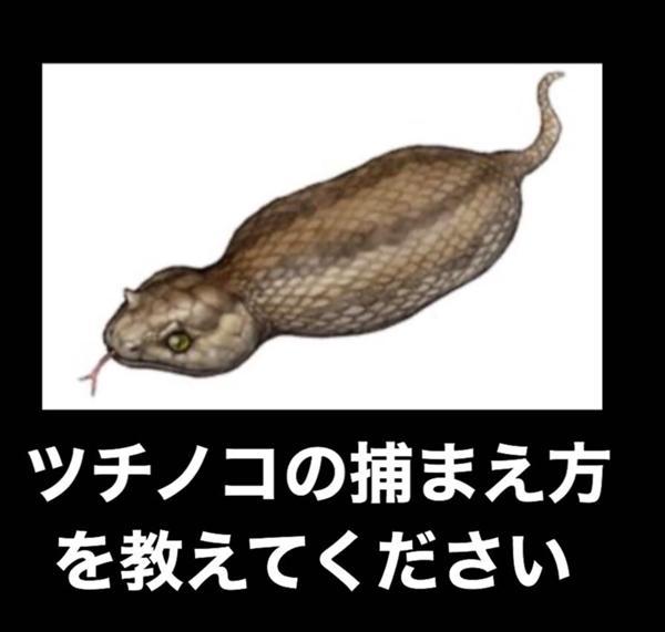よっちゃん イカ 釣り