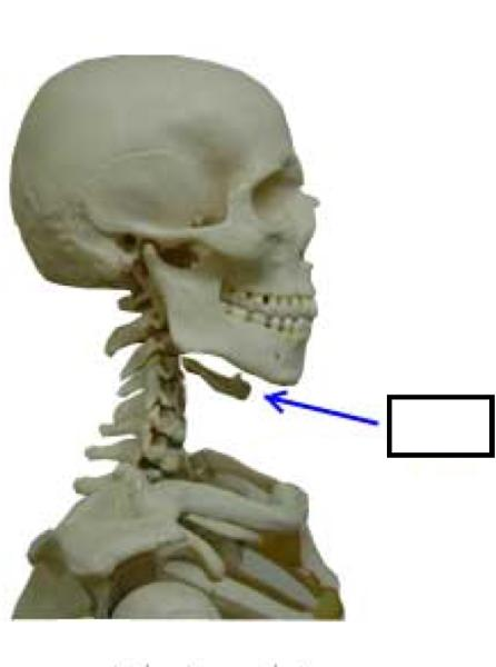 骨 喉 魚の