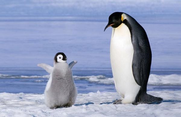 クジラ と ペンギン