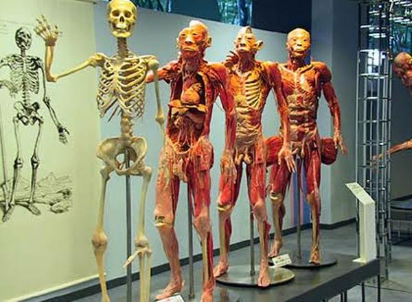 人体の不思議展2018 - 骸骨への...