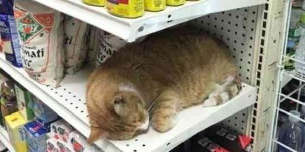生き物苦手板御用達の店では猫が...