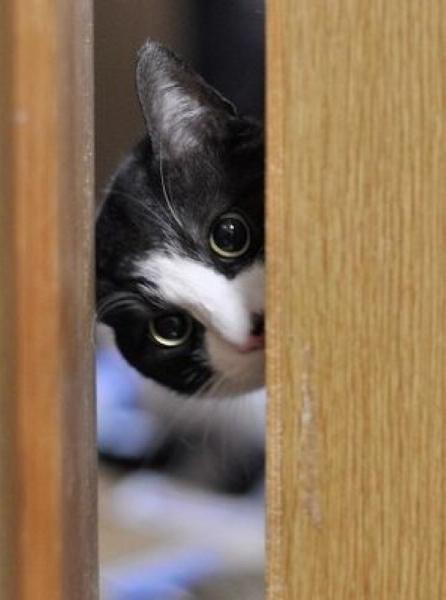 「チラ見 猫」の画像検索結果