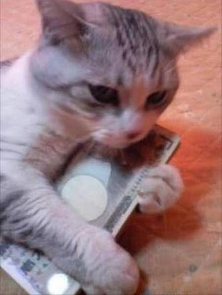 に 意味 猫 小判