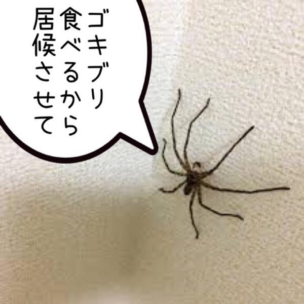 クモ 食べる ゴキブリ を