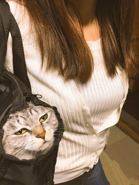 ここまで面白い顔してる猫を2番目に見てしまう , ネコへのボケ