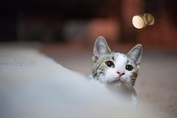 エクスプレス ネコ