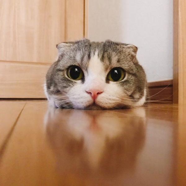 猫 科 ツムツム ツムツム ビンゴ9枚目ネコ科のツムで200万点稼ぐ方法