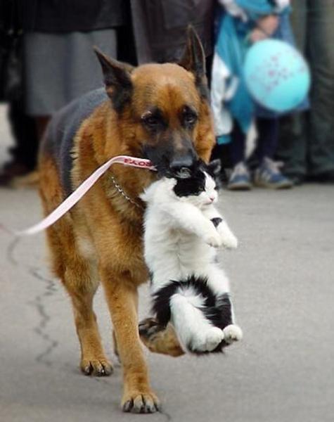 子猫 泣き 止ま ない