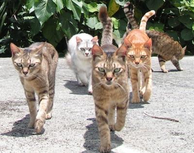 威嚇しながら歩く猫軍団