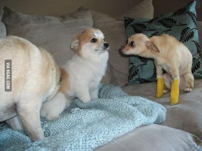 目を合わさない犬