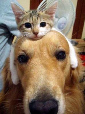 猫かぶり - ネコへのボケ[242271...