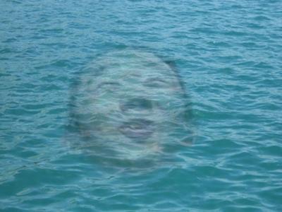 これは海でフルートを吹くと現れるuma 海 へのボケ 9414670 ボケて