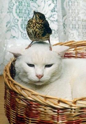 ネコとスズメ