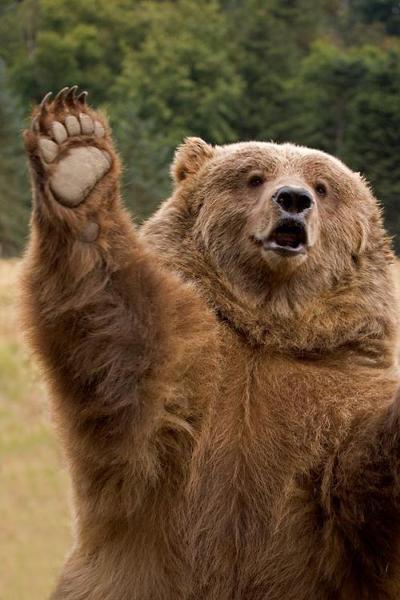 熊の手でもよければ貸しますよ~ - ヒグマへのボケ[66774832] - ボケて ...