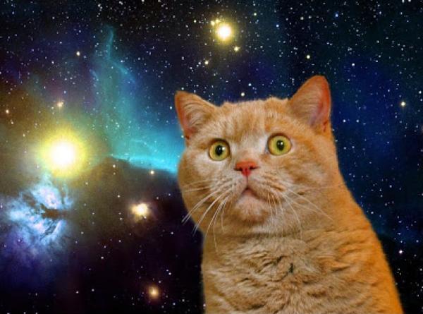 「猫 宇宙」の画像検索結果
