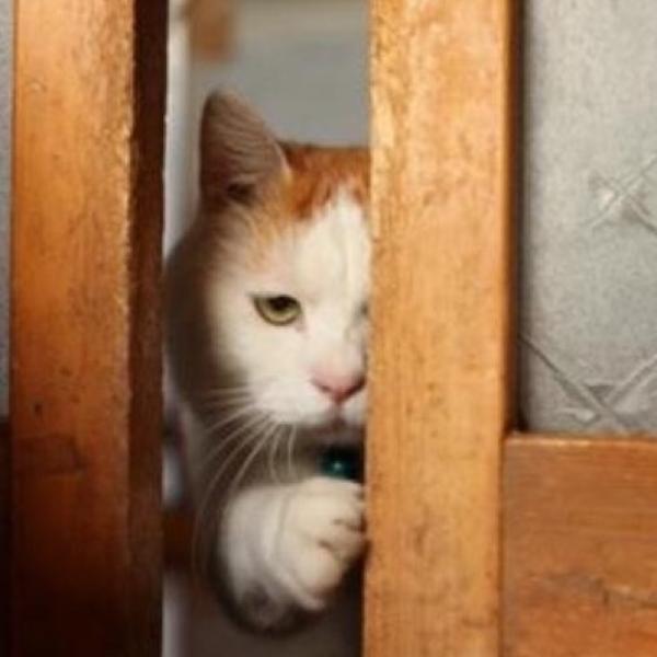 のせ猫の面白ネタ 写真 画像 の人気まとめ タグ ボケて Bokete