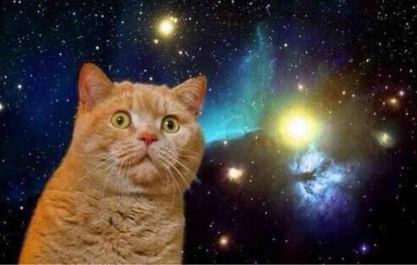宇宙猫のお題一覧 - ボケて(bokete)