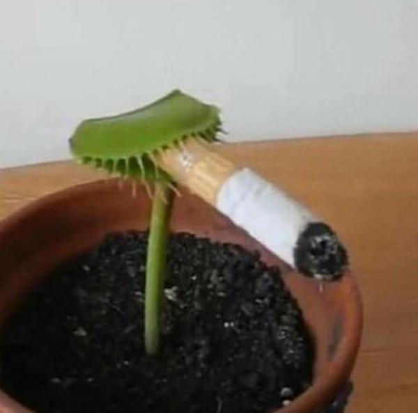 葉巻きタバコの面白ネタ・写真(画像)の人気まとめ【タグ】 - ボケて ...
