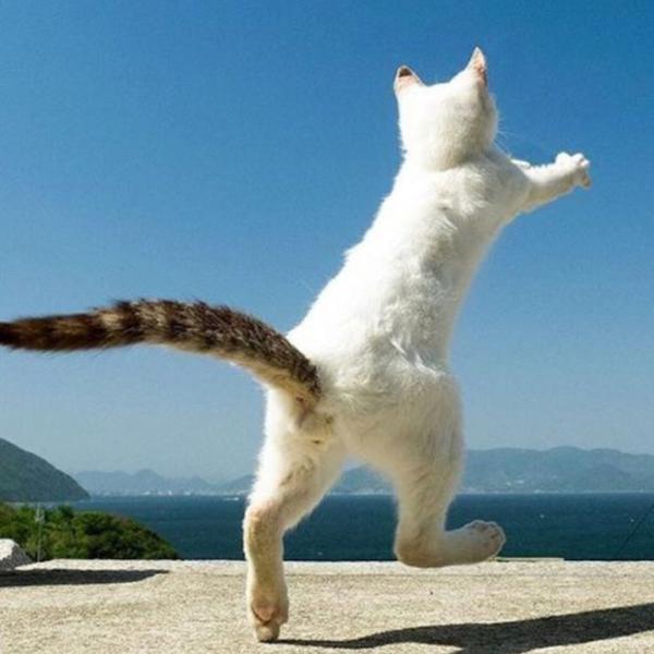 お魚くわえたどら猫を追っ掛けて...