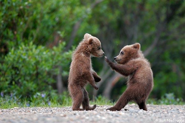 喧嘩するかわいいクマ