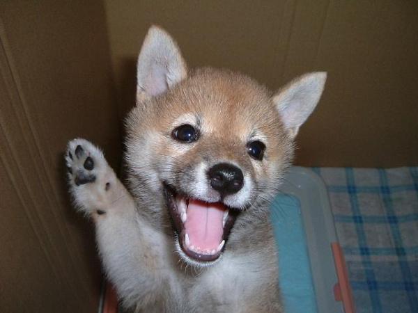 元気出して 応援してるから 犬へのボケ 48191585 ボケて Bokete