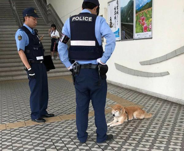 警察官の面白ネタ・写真(画像)の人気まとめ【ラベル】 - ボケて(bokete)